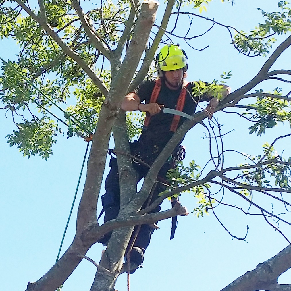 Tree Surgery Round Picture